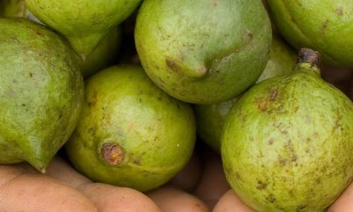macadamia-latelier-des-delices-1500-x-430