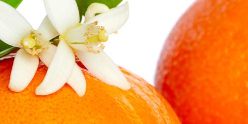 orange-latelier-des-delices-1500-x-430