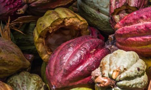 poudre-cacao-latelier-des-delices-1500-x-430