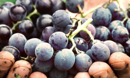 raisin-latelier-des-delices-1500-x-430