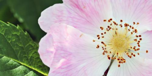 rosier-latelier-des-delices-1500-x-430
